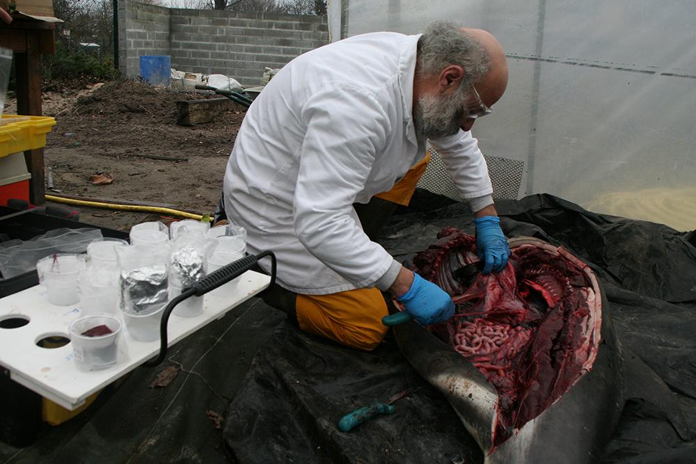 Autopsie d'un dauphin retrouvé mort sur une plage