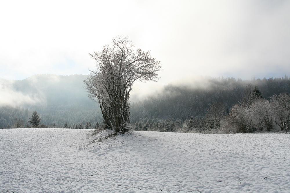 Late November on the plateau