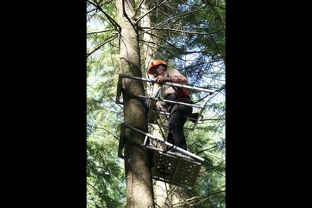 In a Douglas fir