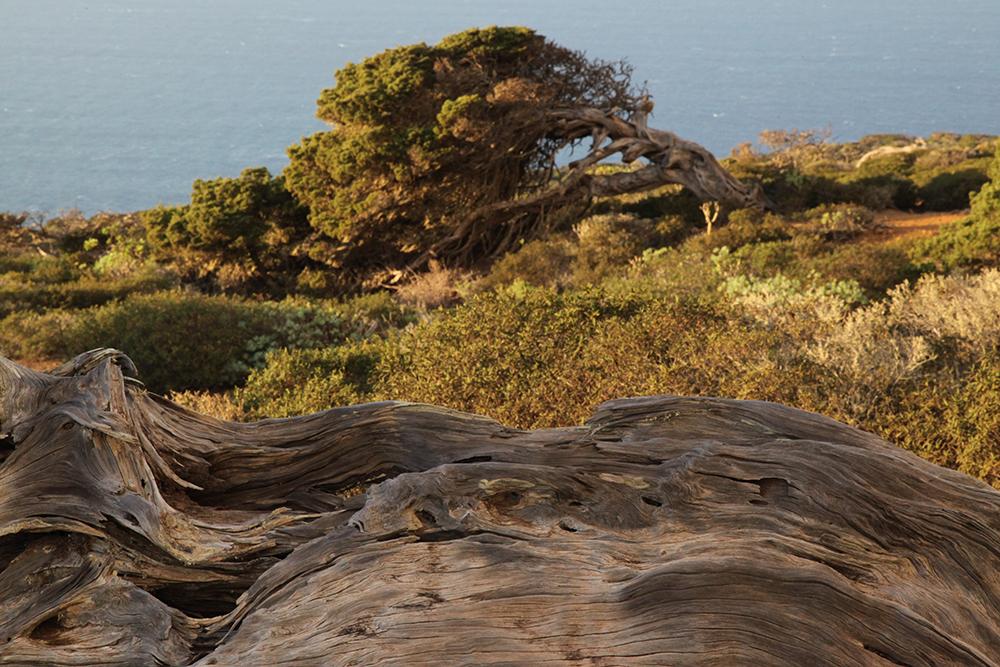Trees fallen by the wind